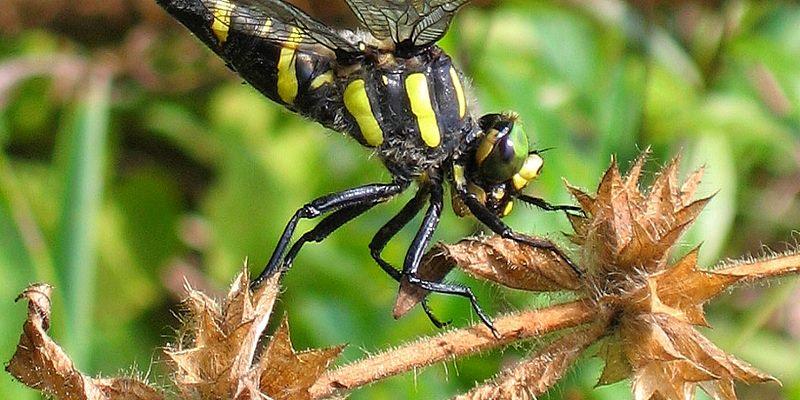 sehen insekten genauso wie menschen